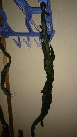 葉部分と茎部分を手で引き裂いて分ける